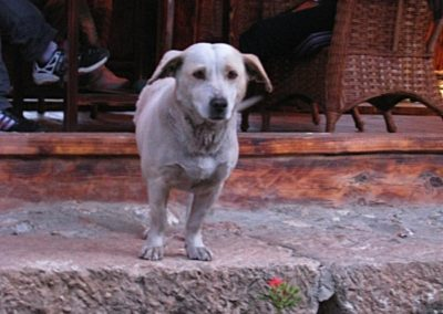 Cute dog in Lijiang