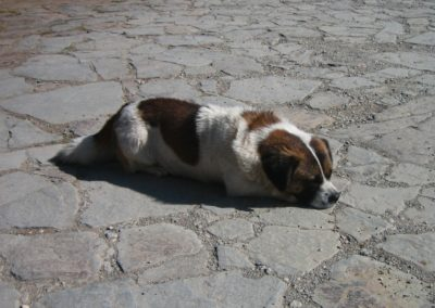 Lijiang sunbathing dog 1