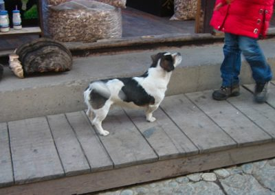Xianggelila friendly dog wagger
